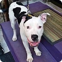Adopt A Pet :: Manny - Brooklyn, NY