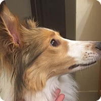 Adopt A Pet :: Quincy - Abingdon, MD