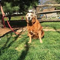 Adopt A Pet :: Honey - Irwin, PA