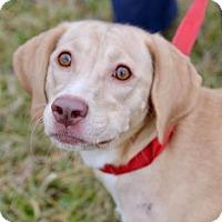 Adopt A Pet :: Bella - Avon, NY