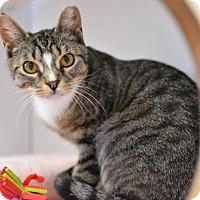 Adopt A Pet :: Julia - Scituate, MA