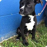 Adopt A Pet :: Connor - Waldorf, MD