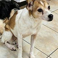 Adopt A Pet :: Twillie - Newark, DE