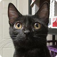 Adopt A Pet :: Maria - Winchester, CA
