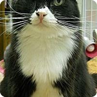 Adopt A Pet :: Marmaduke - Ridgecrest, CA