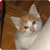 Adopt A Pet :: Inga (AKA The Beast) - bloomfield, NJ