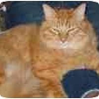 Adopt A Pet :: Maui - Scottsdale, AZ