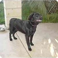 Adopt A Pet :: Joy - Chula Vista, CA