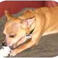 Adopt A Pet :: Bruno - Pembroke Pines, FL