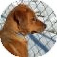 Adopt A Pet :: Melanie - Denver, CO