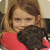 Adopt A Pet :: Denver - Reisterstown, MD