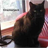 Adopt A Pet :: Crackerjack - Portland, OR
