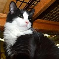 Adopt A Pet :: Dixie - Wellesley, MA