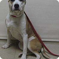 Adopt A Pet :: China - Gary, IN