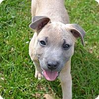 Adopt A Pet :: Jackson - Knoxville, TN