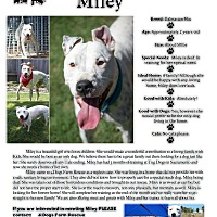 Adopt A Pet :: Miley - Sacramento, CA