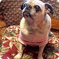 Adopt A Pet :: Blossom - Temecula, CA