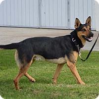 Adopt A Pet :: Trapper - Downey, CA
