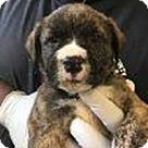 Adopt A Pet :: Willow's Kade