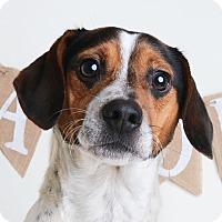 Adopt A Pet :: Bobo - Wilmington, DE