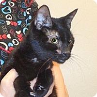 Adopt A Pet :: Jade - Wildomar, CA