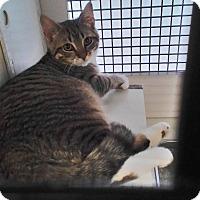 Adopt A Pet :: Rhett - Richmond, VA