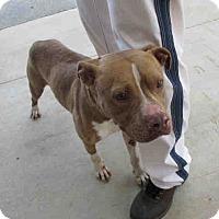Adopt A Pet :: Rocky - Newnan City, GA