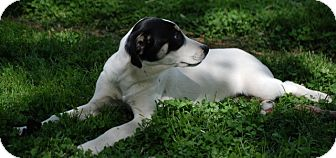 Coonhound Mix Puppy for adoption in Providence, Rhode Island - Aimee