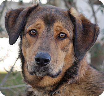 German Shepherd Dog Mix Puppy for adoption in Los Angeles, California - Godley von Geld