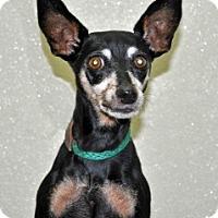Adopt A Pet :: Becky - Port Washington, NY