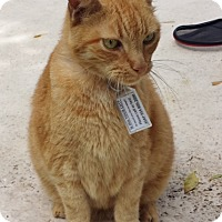 Adopt A Pet :: Garfield - Deerfield Beach, FL