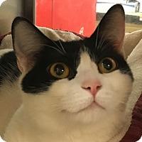Adopt A Pet :: Lila - Winchester, CA
