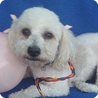 Adopt A Pet :: Fluffs-WATCH MY VIDEO!!! - Irvine, CA