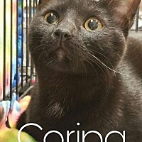 Adopt A Pet :: Corina - Grand Blanc, MI