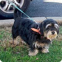 Adopt A Pet :: Tubby boy - Sacramento, CA