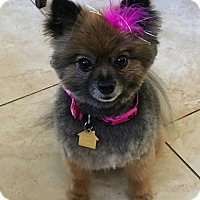 Adopt A Pet :: Ming - Freeport, NY