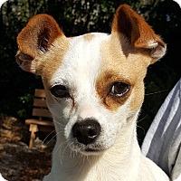 Adopt A Pet :: Eddy - Key Largo, FL