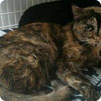 Adopt A Pet :: Wilma - Ashtabula, OH