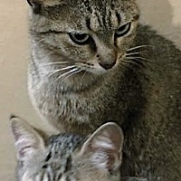 Adopt A Pet :: Mom Gail & Katniss - Walworth, NY