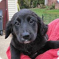 Adopt A Pet :: Ruby - South Jersey, NJ