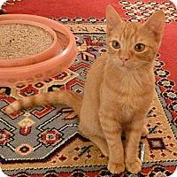 Adopt A Pet :: Poppy - Bedford, MA