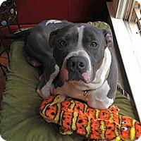 Adopt A Pet :: Lincoln - Dallas, GA