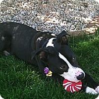 Adopt A Pet :: Banjo - Cleveland, OH
