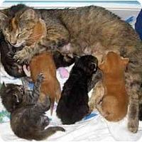Adopt A Pet :: Alvin - Richmond, VA