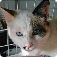 Adopt A Pet :: Simone - Brea, CA