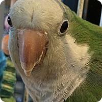 Adopt A Pet :: Cujo - Punta Gorda, FL