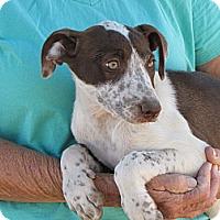 Adopt A Pet :: GYPESEE - Nuevo, CA