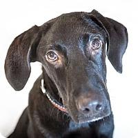 Adopt A Pet :: Briley - Randolph, NJ