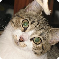 Adopt A Pet :: Sylvia - Olmsted Falls, OH