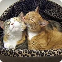 Adopt A Pet :: Daisy & Rosie (bonded girls) - Roseville, MN